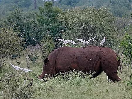 95. Kruger Nat Park, South Africa
