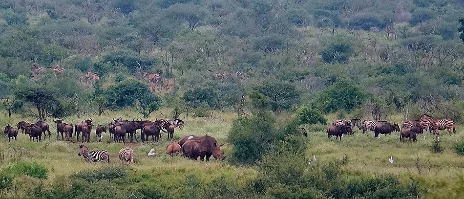 96. Kruger Nat Park, South Africa