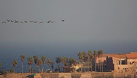 208. Dakar, Senegal
