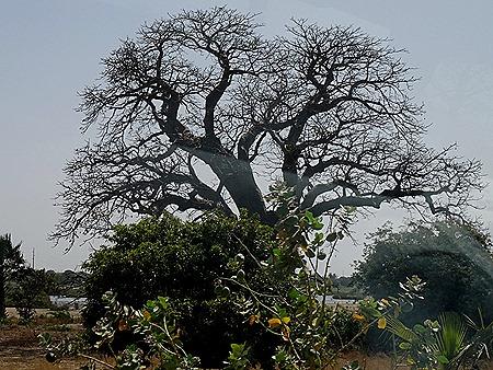 47. Banjul, The Gambia