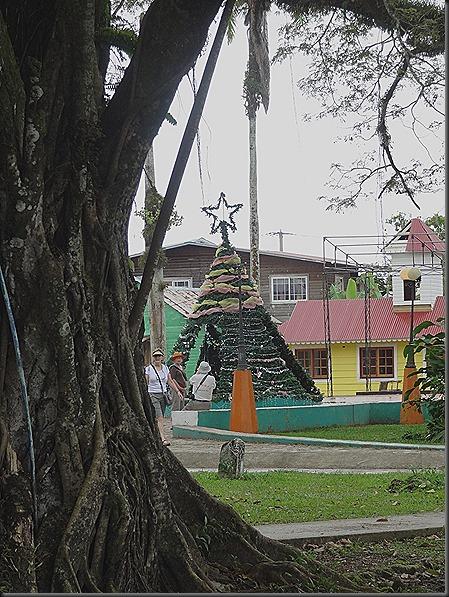 Christmas Tree in park, Bocas Del Toro