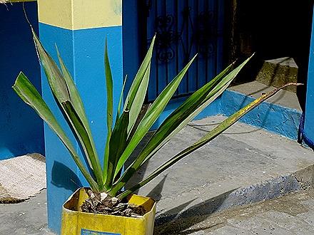 19. Manta, Equador