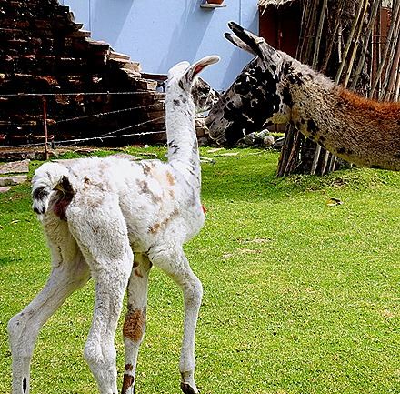 43. Matarani, Peru