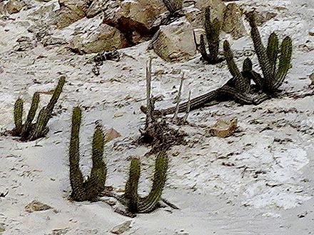 9a. Matarani, Peru