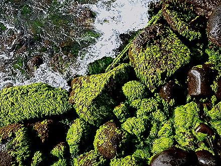 12. Robinson Crusoe Island, Chile