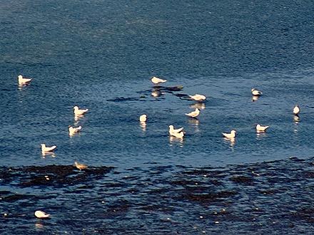 37. Isla Chiloe, Chile