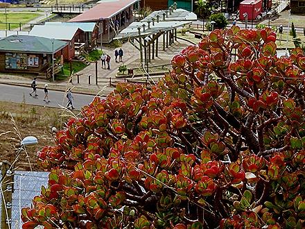 81. Robinson Crusoe Island, Chile