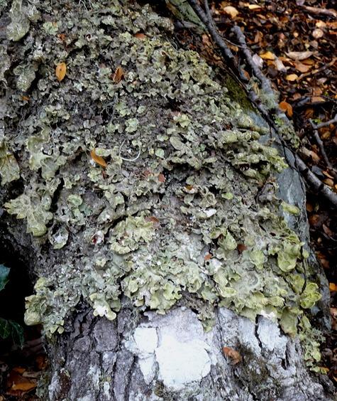 26. Ushuaia