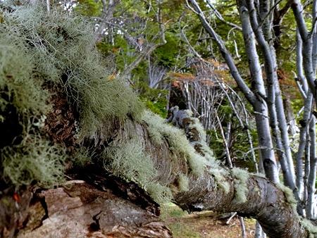 46. Ushuaia