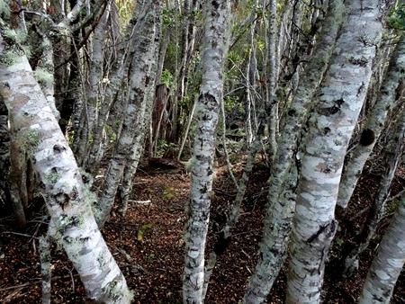 54. Ushuaia