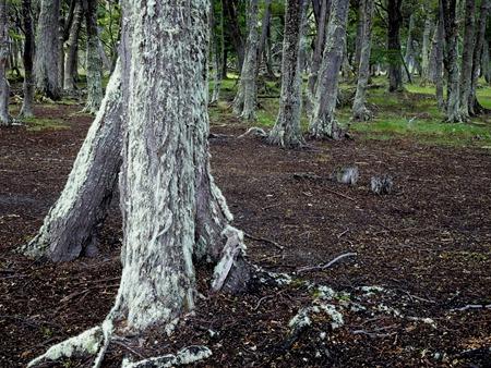 87. Ushuaia