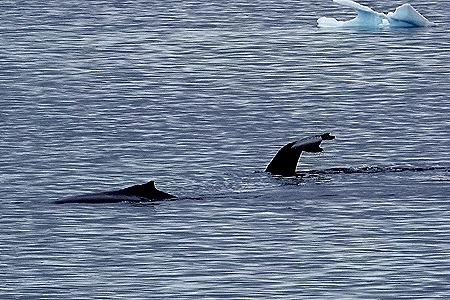 107. Antarctica (Day 2)
