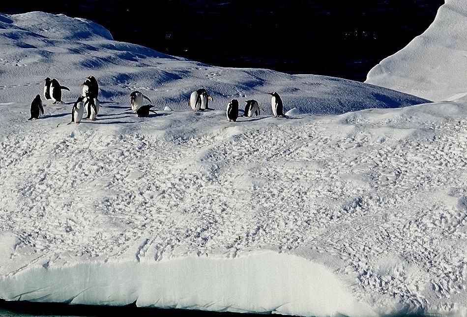 143. Antarctica (Day 1) edited