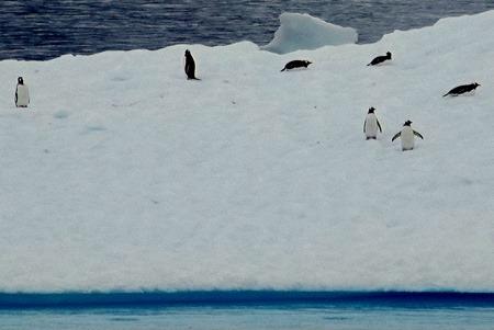 146. Antarctica (Day 2)