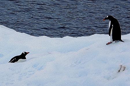 149. Antarctica (Day 2)