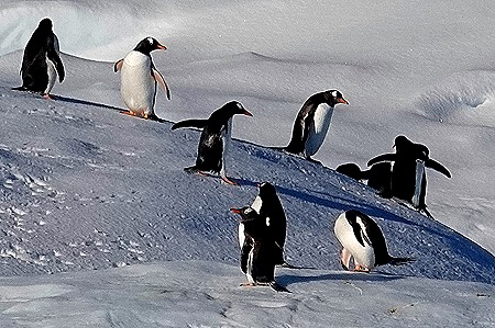 150. Antarctica (Day 1) edited