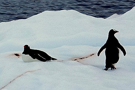 150. Antarctica (Day 2)