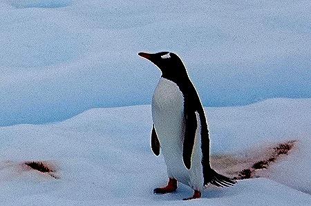 151. Antarctica (Day 2)