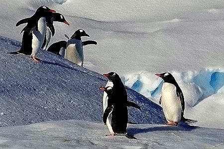 153. Antarctica (Day 1) edited