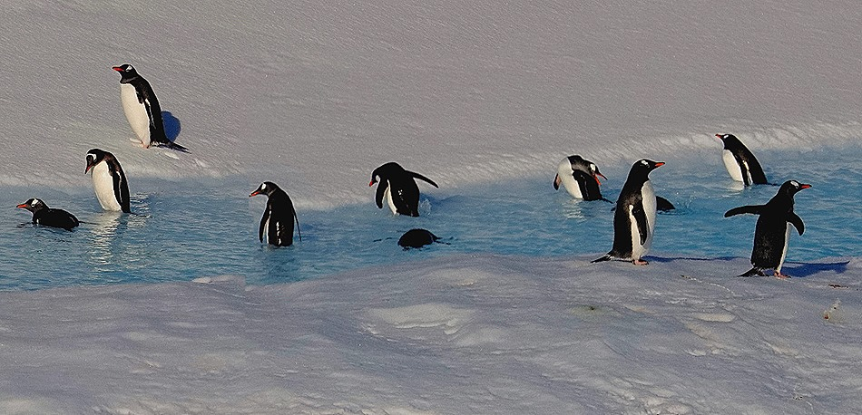 154a. Antarctica (Day 1) edited_stitch