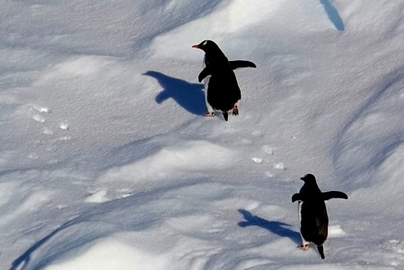 157. Antarctica (Day 1) edited