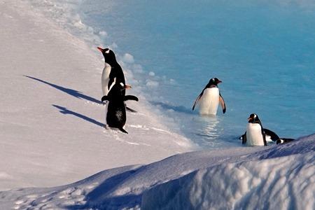 160. Antarctica (Day 1) edited