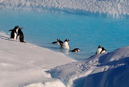 162. Antarctica (Day 1) edited