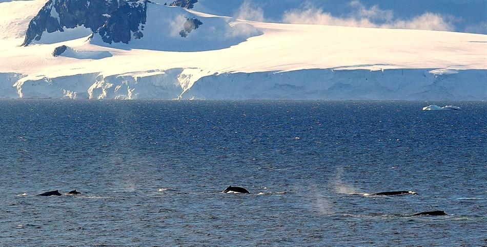 179. Antarctica (Day 1) edited
