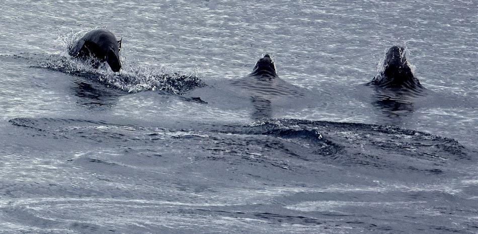 181. Antarctica (Day 2)