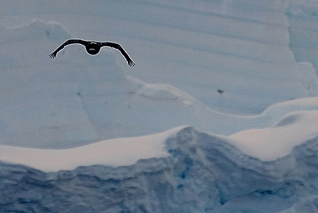 244. Antarctica (Day 1) edited