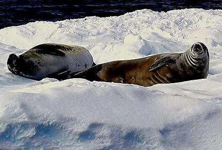 276. Antarctica (Day 1) edited