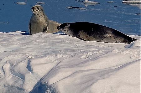 360. Antarctica (Day 1) edited