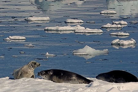 361. Antarctica (Day 1) edited