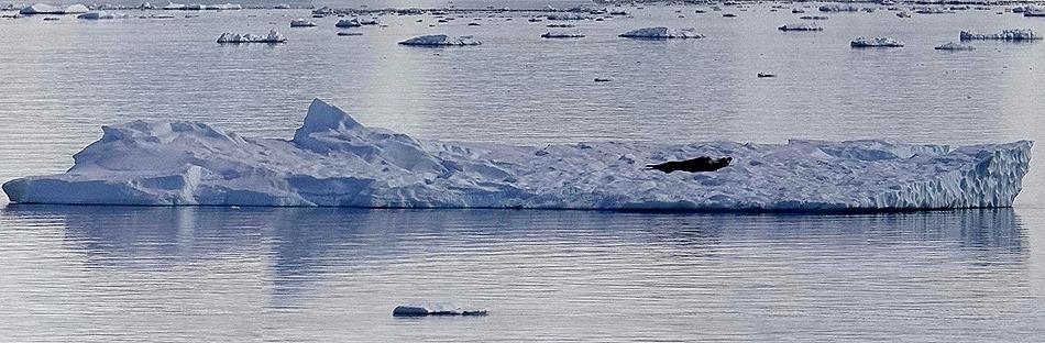 379a. Antarctica (Day 1) edited_stitch