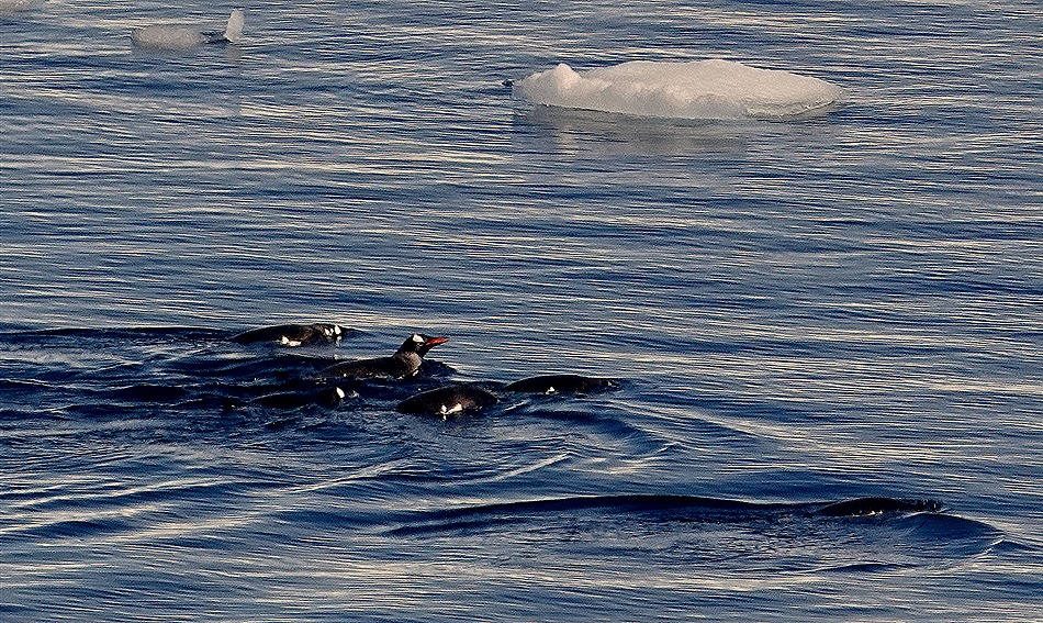 402. Antarctica (Day 1) edited