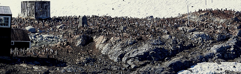 435a. Antarctica (Day 1) edited_stitch