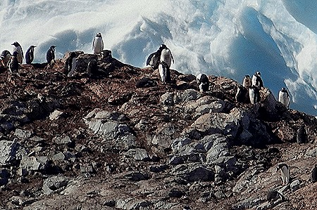 454. Antarctica (Day 1) edited