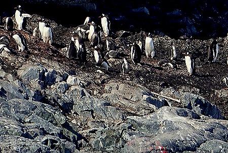 456. Antarctica (Day 1) edited