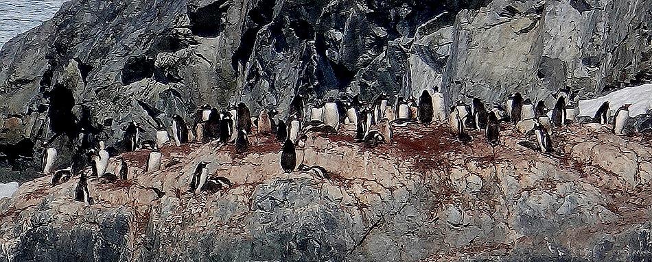 483. Antarctica (Day 1) edited