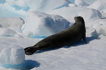 529. Antarctica (Day 1) edited