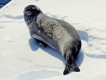 566. Antarctica (Day 1) edited