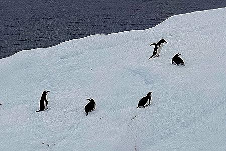 92. Antarctica (Day 2)