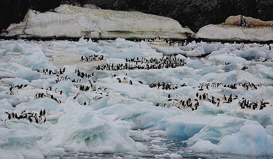 109. Antarctica (Day 3)