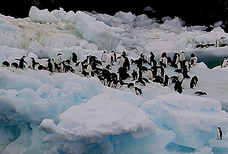 110. Antarctica (Day 3)