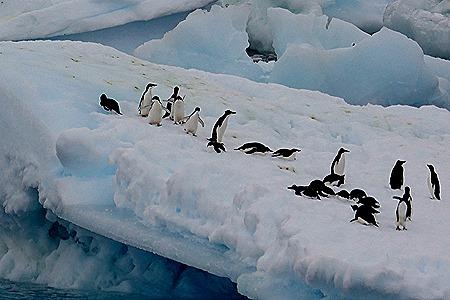 111. Antarctica (Day 3)
