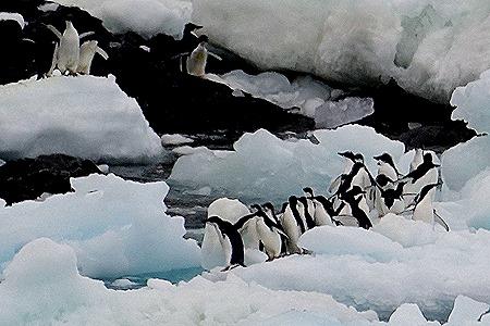127. Antarctica (Day 3)