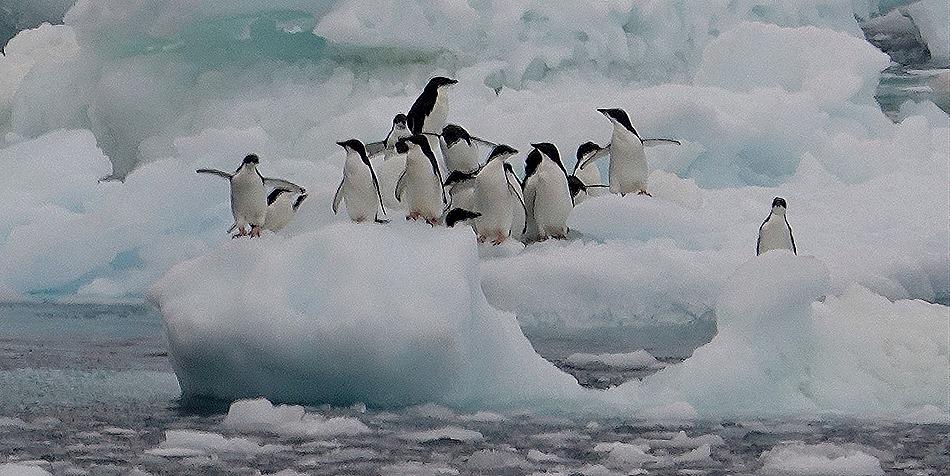 131. Antarctica (Day 3)