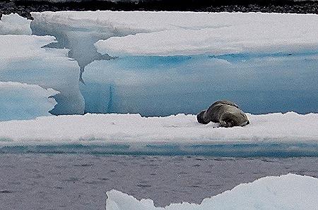 183. Antarctica (Day 3)