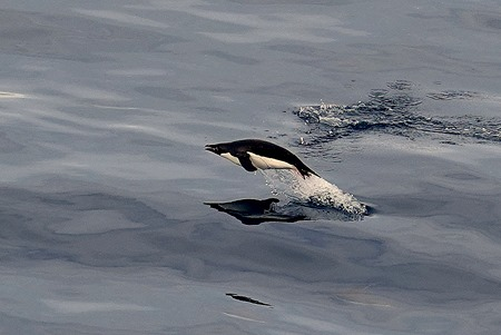 191. Antarctica (Day 3)