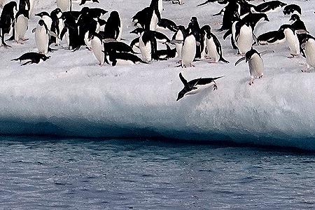 226. Antarctica (Day 3)